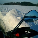 winterkalb_10
